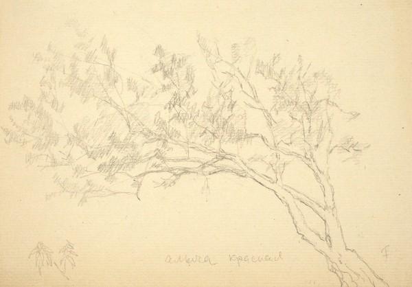 Фальк Роберт Рафаилович (1886—1958) «Алыча красная». 1930-е. Бумага, графитный карандаш, 15,4 х 21,2 см.